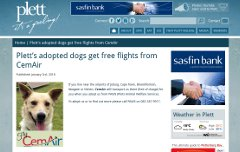 Plett's adopted dogs get free flights from CemAir